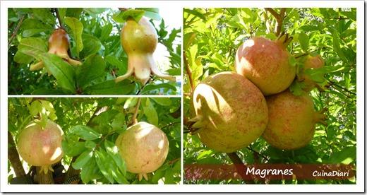 P-Magranes-cuinadiari-1