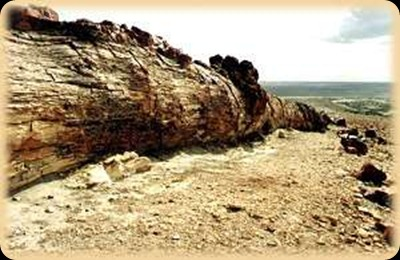 Jaramillo Petrified Forest1