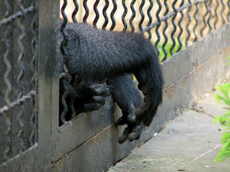 Warszawskie zoo - img_6246.jpg