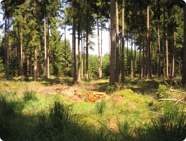 biodiversità-abete-rosso