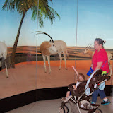 Houston Museum of Natural Science - 116_2818.JPG