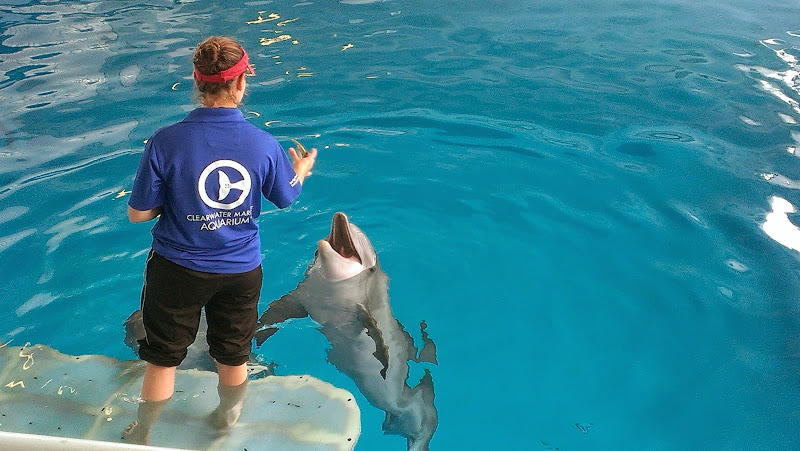 IMAG6358 A Dolphin Tale 2 Experience at Clearwater Marine Aquarium: #WinterHasHope