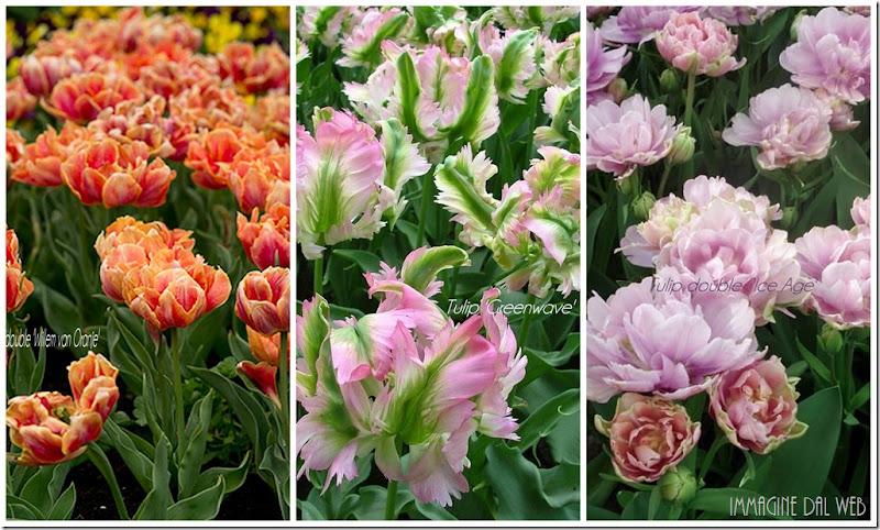 Una splendida sorpresa che arriva da lontano by tyziana for Promesse de fleurs