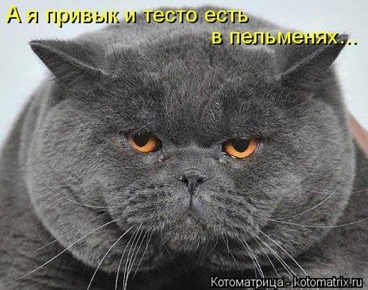 1411716330_kotomatricy-26