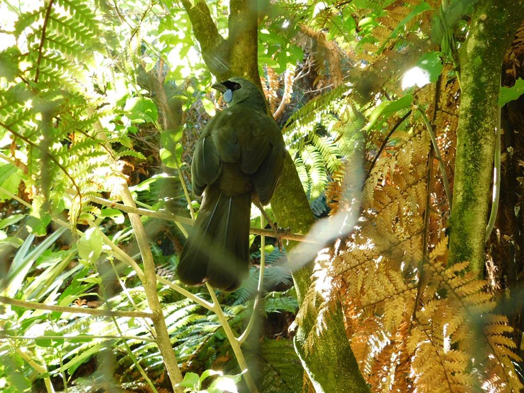 [C023_NZ+NI+Mt+Bruce+Wildlife+Centre_2018-04-27_DSCN9051%5B3%5D]