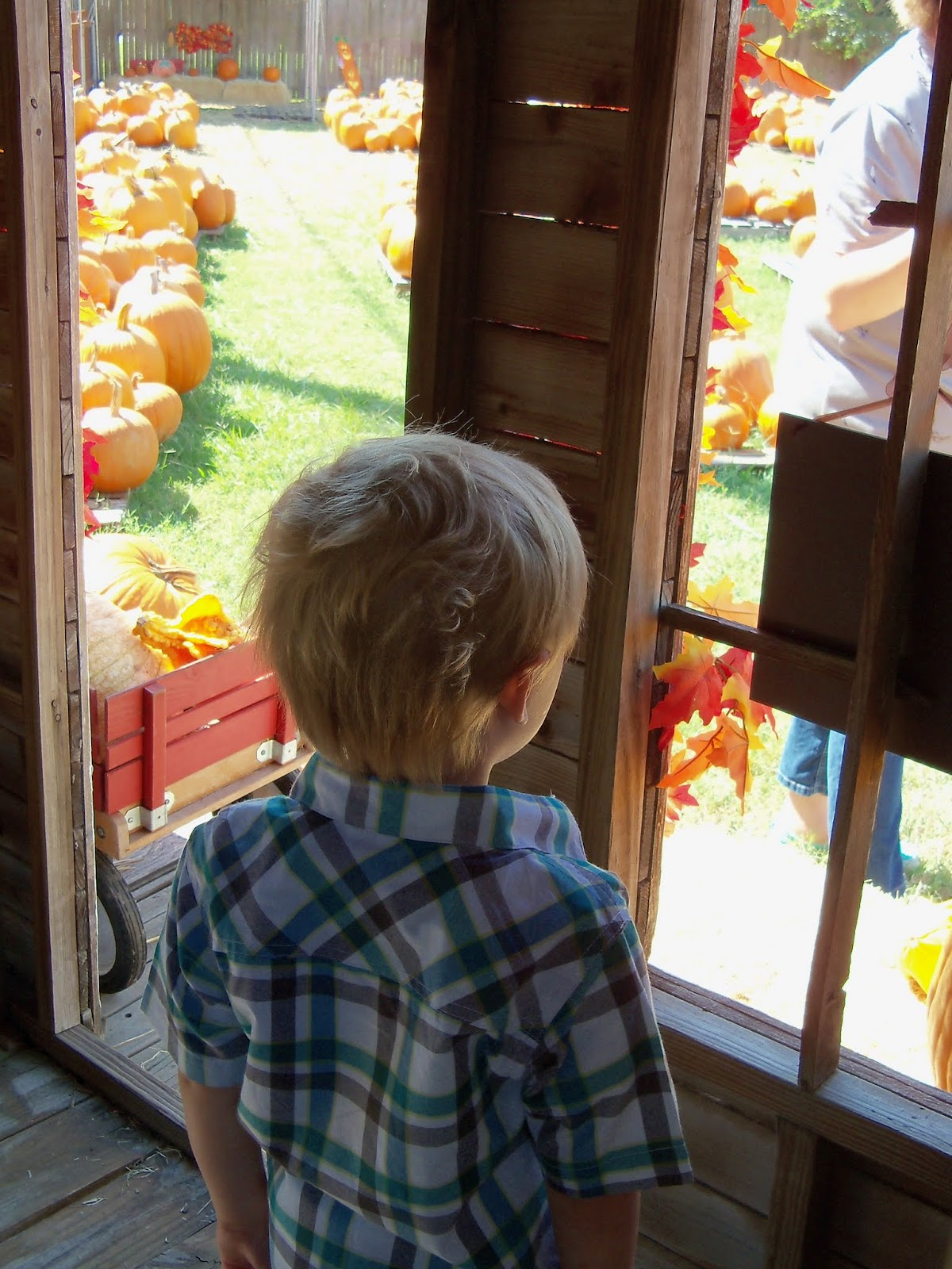 Pumpkin Patch 2015 - 100_0438.JPG