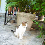 Key West Vacation - 116_5408.JPG