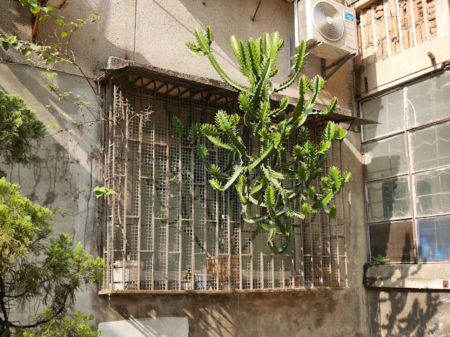 plant reaching through a steel window grill to soak in more sunlight