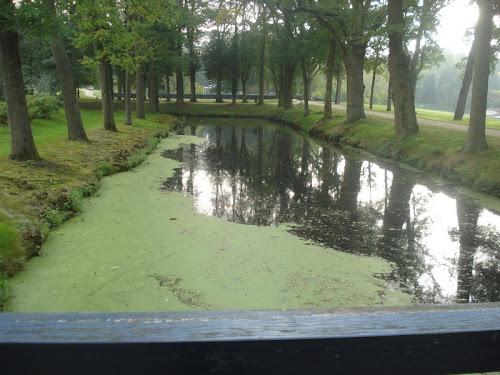 Verde e acqua