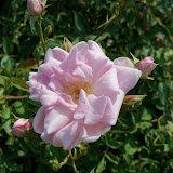 Gardening 2011 - 100_9400.JPG