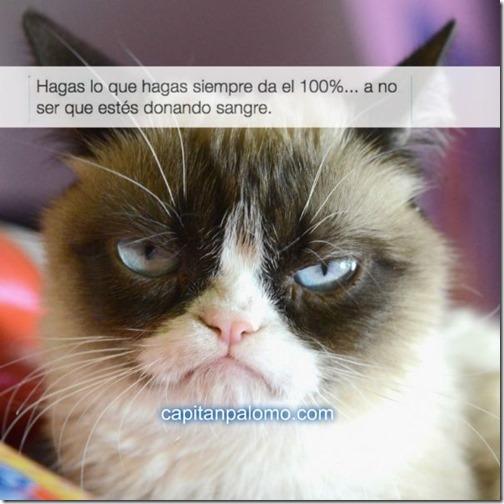 meme del gato gruñon (9)