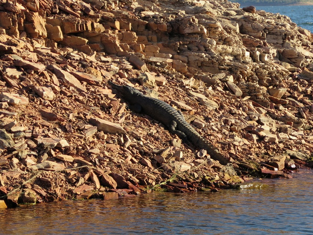 [170601+062+Lake+Argyle+Cruise+Fresh+Water+Crocodile%5B3%5D]