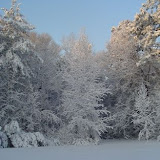 Backyard snow trees.jpg