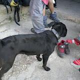 Sortida Sant Salvador de les espasses 2006 - CIMG8263.JPG