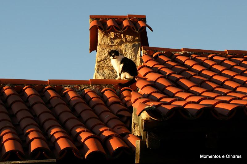 Gato ao sol