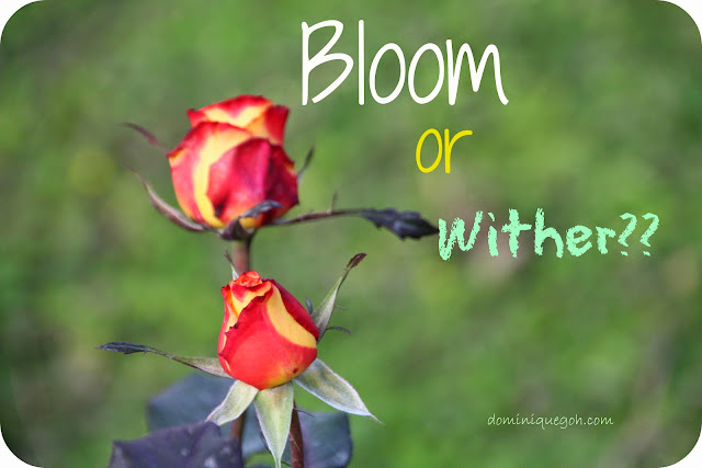 Bloom or Wither?