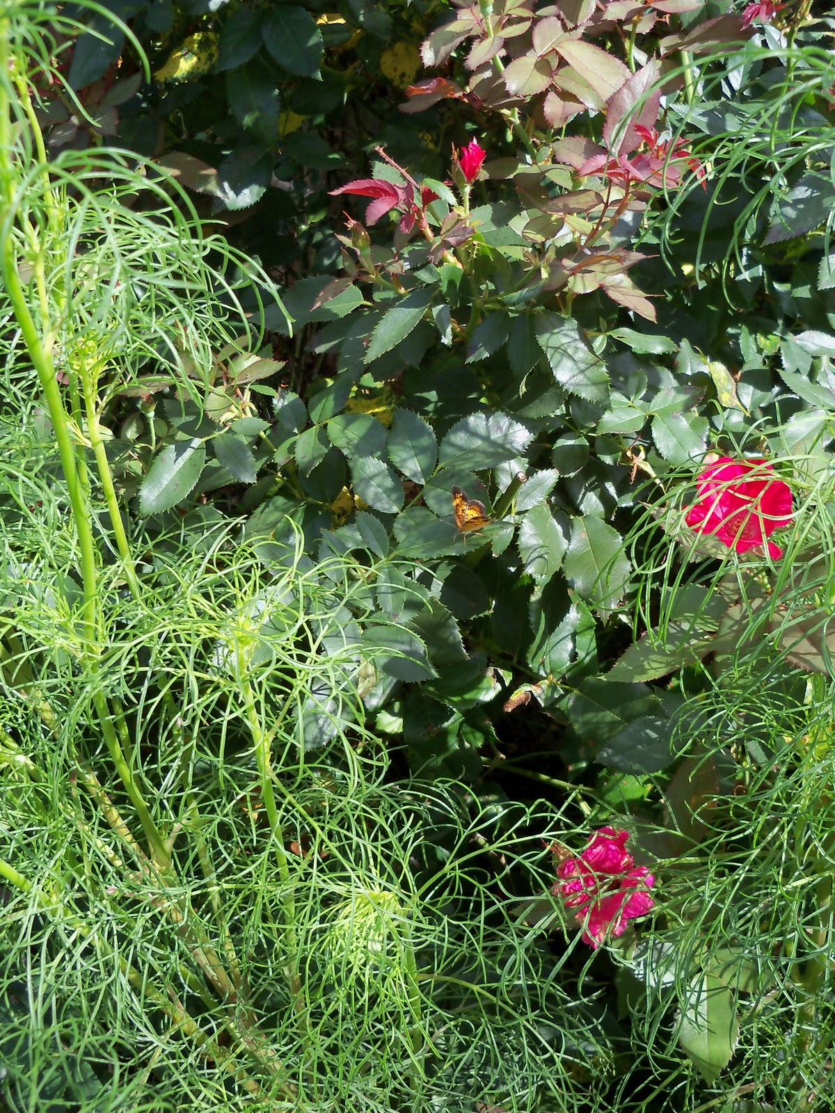 Gardening 2010, Part Three - 101_5018.JPG