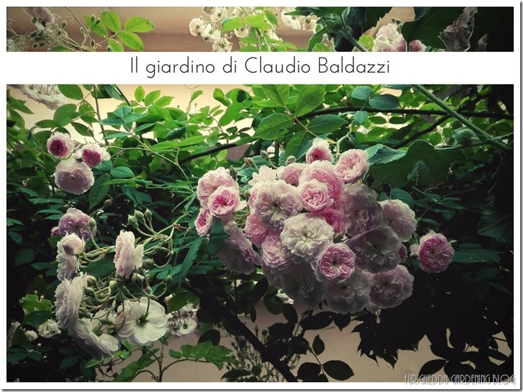 Il giardino di Claudio (21)