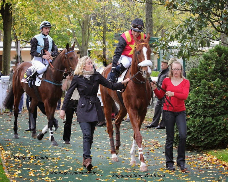 Photos Auteuil 2-11-2014 (48h de l'obstacle) IMG_5263