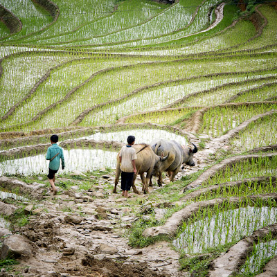 Cascading Cultivation