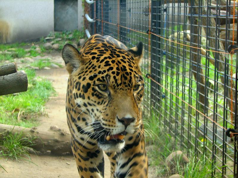 Warszawskie zoo - img_6337.jpg