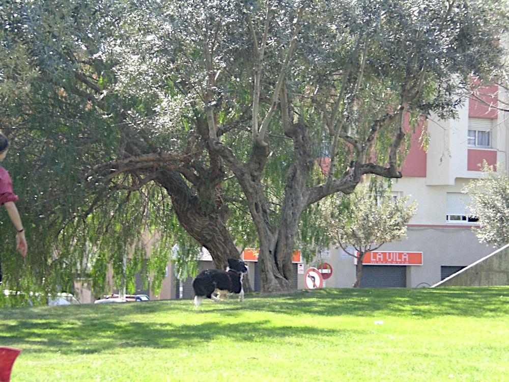 Sortida Sant Salvador de les espasses 2006 - CIMG8459.JPG