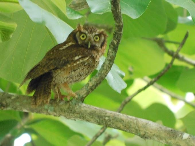 Cusumbo liberado en Jardín, primero de su especie en ser monitoreado satelitalmente.