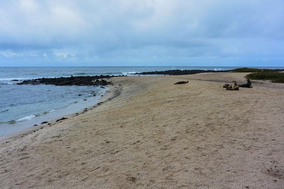 galapagos - Galapagos_FB_2-117.jpg