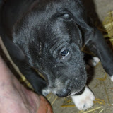 Gretta & Cobalt Blues 3/24/12 litter - SAM_3420.JPG