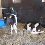 Welpen - Kinderboerderij & Crossbaan - IMG_2473.JPG