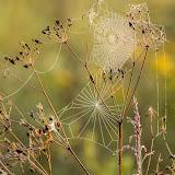 Утренняя паутинка