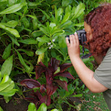 06-26-13 National Tropical Botantial Gardens - IMGP9456.JPG