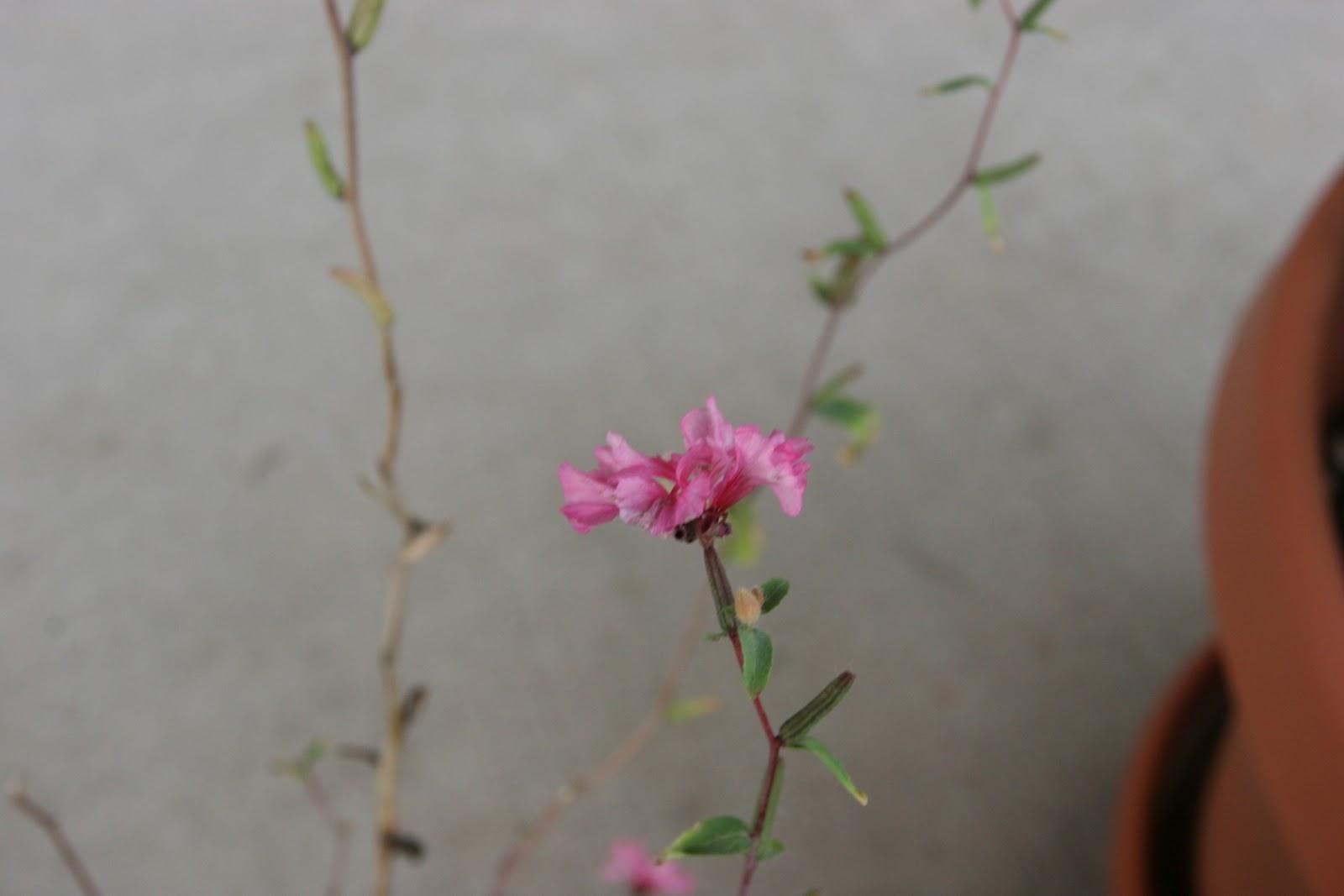 Gardening 2012 - IMG_3321.JPG