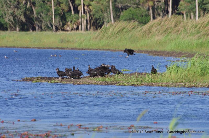 04-06-12 Myaka River State Park - IMGP9920.JPG