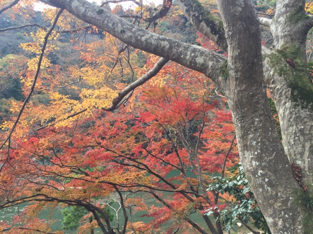 Amazing fall colours in Arashiyama, Kyoto
