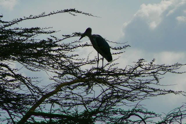 Serengeti National Park - bird