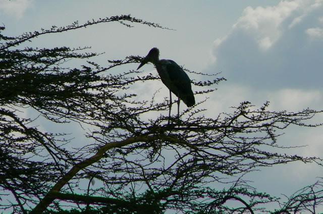Serengeti National Park - bird