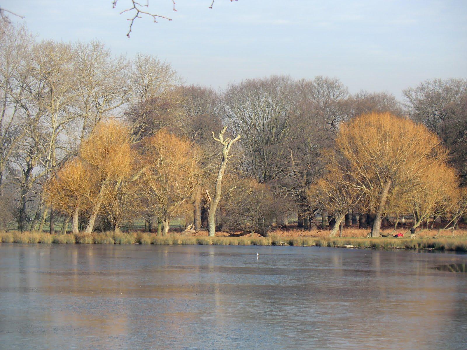 CIMG2325 Willows at Pen Pond