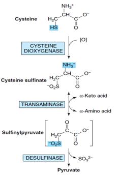胺基酸與丙酮酸形成(amino acid and pyruvate formation) - 小小整理網站 Smallcollation