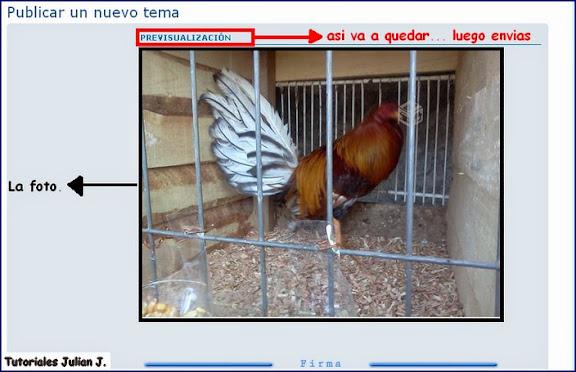 tutorial  para pegar imagenes en el foro Subir%2520imagen%25205%2520%2528Copiar%2529