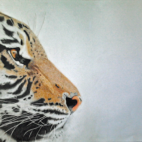 Striped Death by Paul Murray - Drawing All Drawing ( pencil, nature, tiger, endangered, wildlife, drawing, animal )