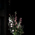 Florisant4.jpg