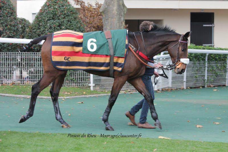 Photos Auteuil 29-11-2015 IMG_7469