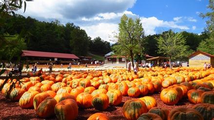 Burts Pumpkin Farm