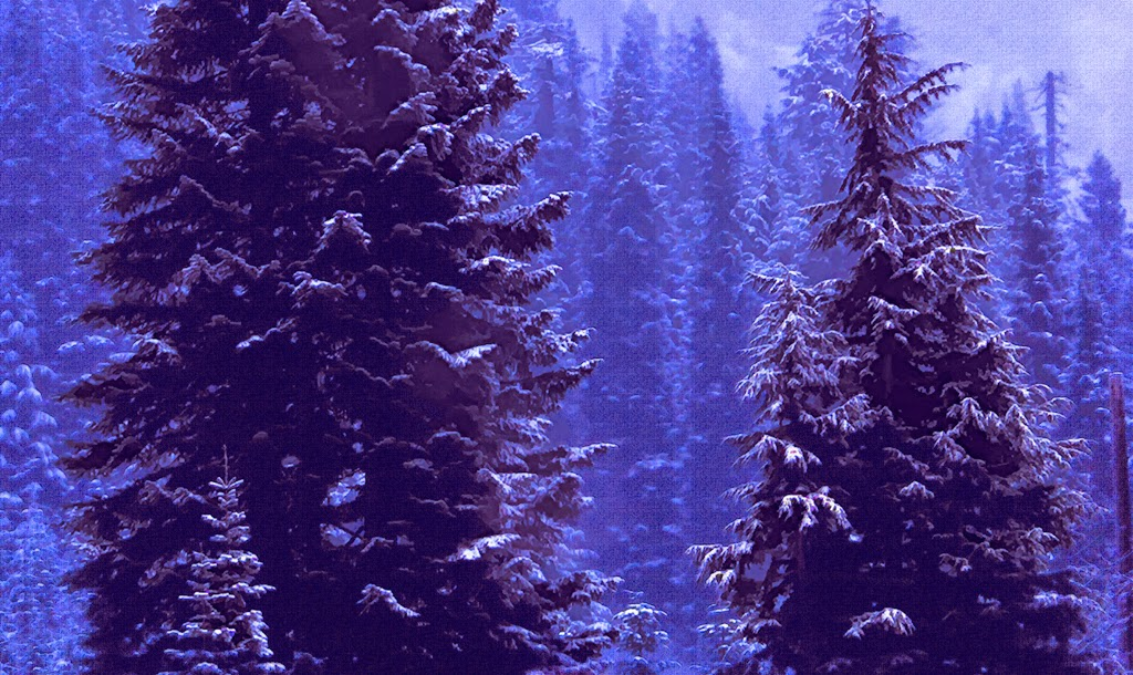 """""""Cold Trees"""" by Robert Dunbar -- 2nd place B Special"""