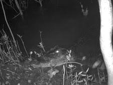 wildlife-crocodile-2.jpg