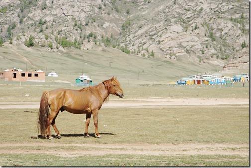 Mongolia113