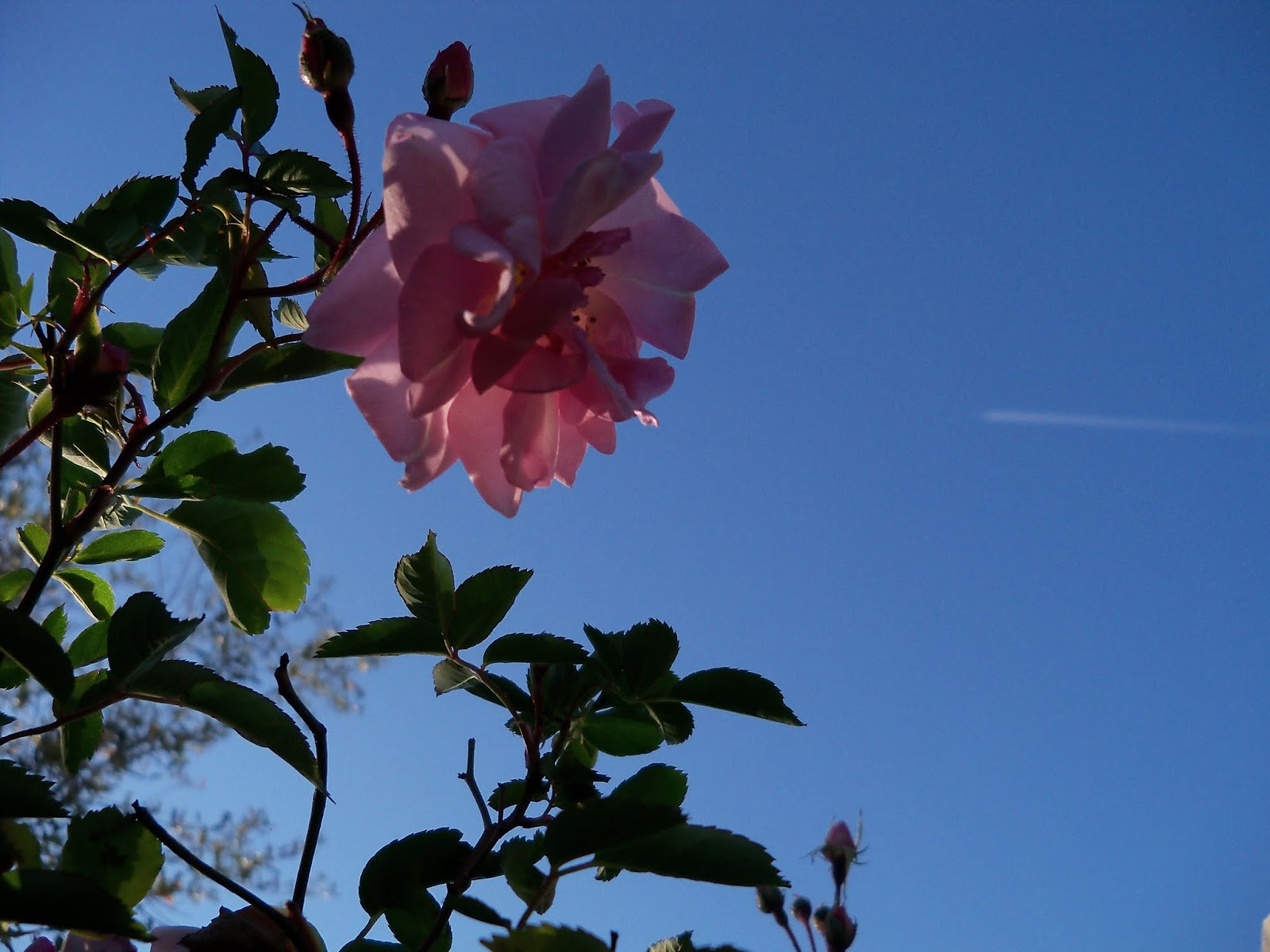 Gardening 2013 - 115_5411.JPG
