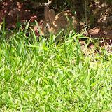 Gardening 2015 - 116_9055.JPG