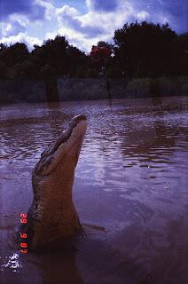 5920Adelaide River Croc Tour